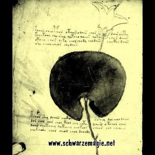 Buch Soyga, das Buch, was tötet